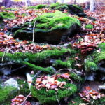 Moss can be used to generate electricity